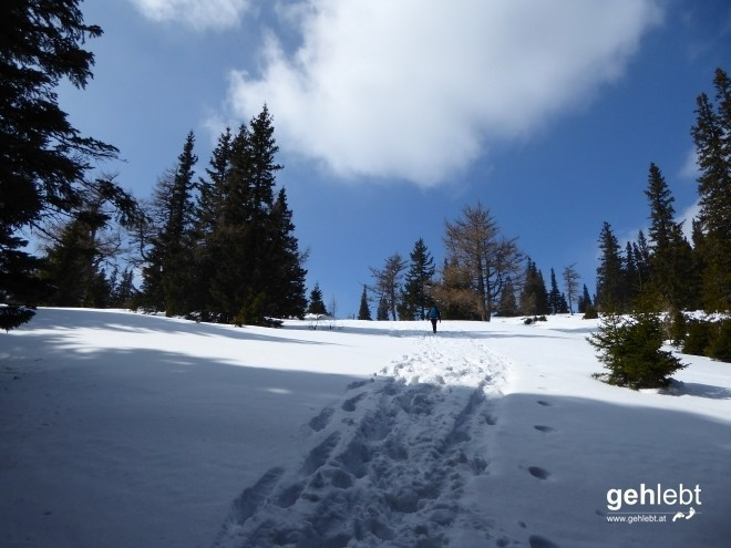 Noch Schnee in Hülle und Fülle am Weg Richtung Krummbachstein.