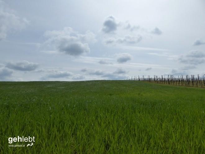 In die Grean gehen im Weinviertel_Blogger-DayTrip (12)