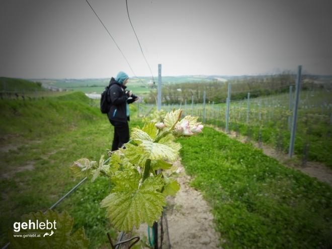 In die Grean gehen im Weinviertel_Blogger-DayTrip (14)