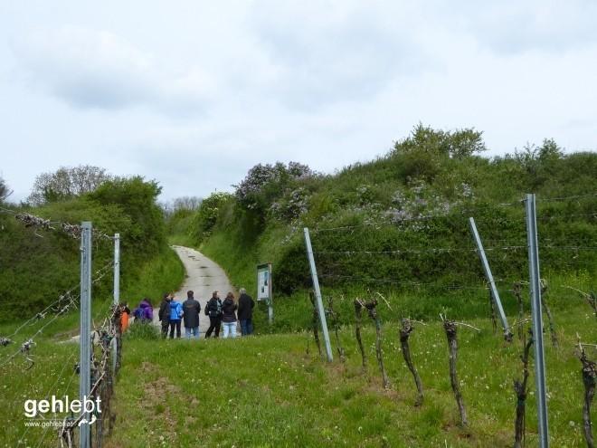 In die Grean gehen im Weinviertel_Blogger-DayTrip (15)