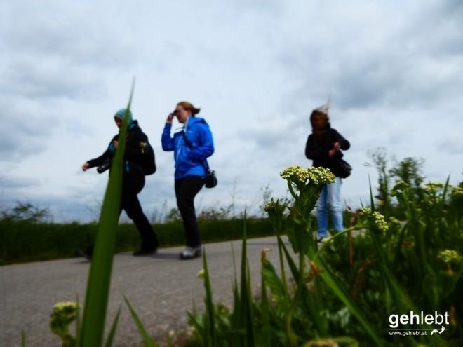 In die Grean gehen im Weinviertel_Blogger-DayTrip (16)