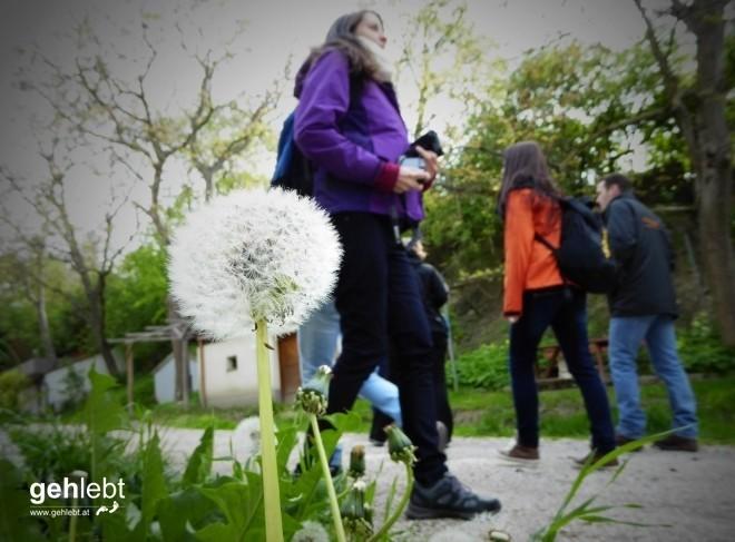 In die Grean gehen im Weinviertel_Blogger-DayTrip (6)