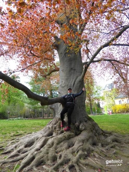 Ali...Peter im Wunderl...Wertheimsteinpark.