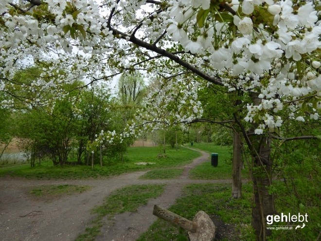 Blühende Bäume gibt's bekanntlich nur im Frühling.