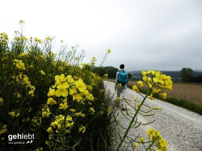 Vier Tage Wiener Alpenbogen - Tag 2 (12)