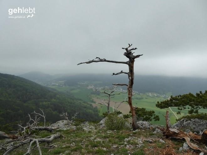Vier Tage Wiener Alpenbogen - Tag 2 (8)