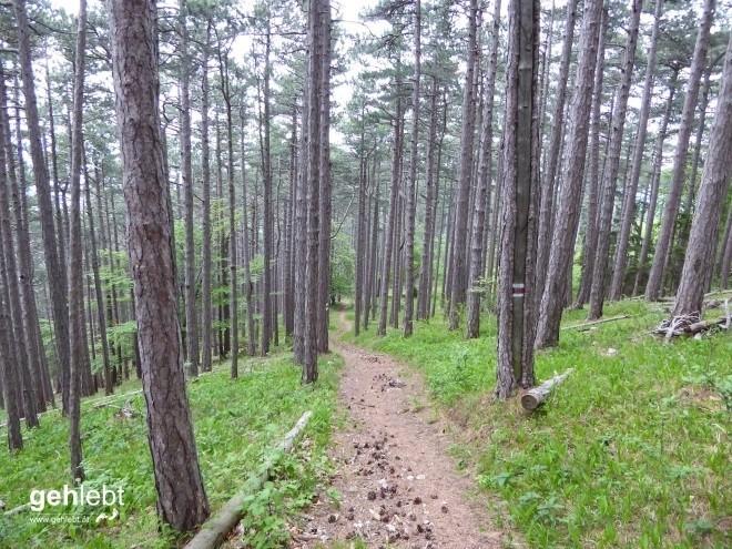 Vier Tage Wiener Alpenbogen - Tag 2 (9)