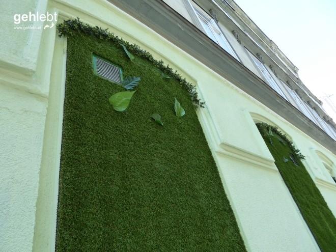 Es grünt so grün auf Wiens Wänden.