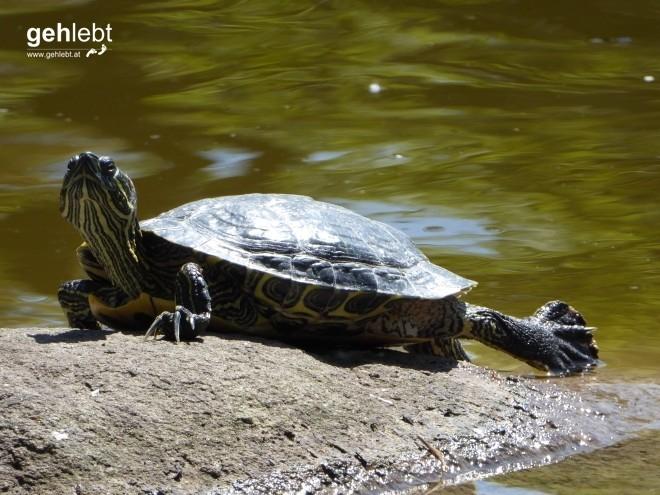 Der Ninja-Turtle im Stadtpark weiß sich in Pose zu werfen.
