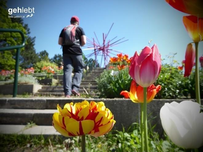 Farbenprächtige Motive im Kurpark Oberlaa.