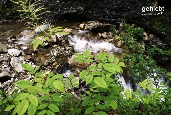 Nationalpark Kalkalpen - Holzgraben