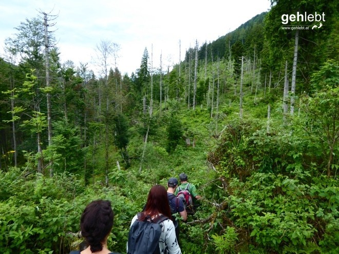 Nationalpark Kalkalpen (7) - Waldwildnis
