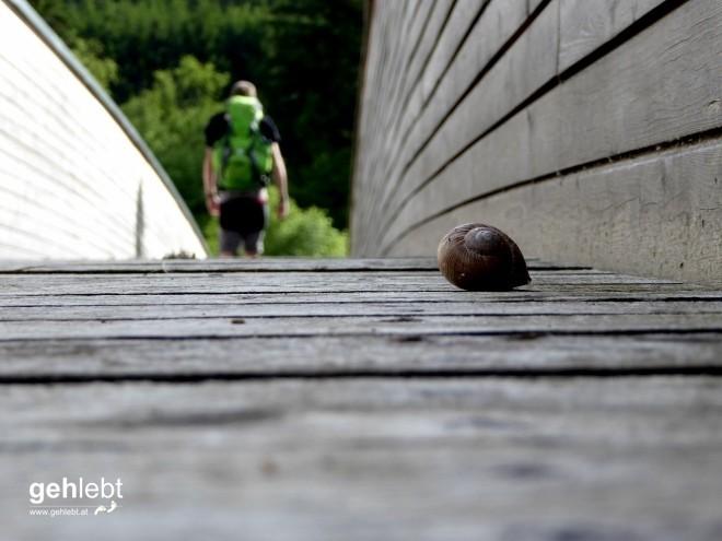 Schneeberg Rax Backstage - Etappe 3 (4)