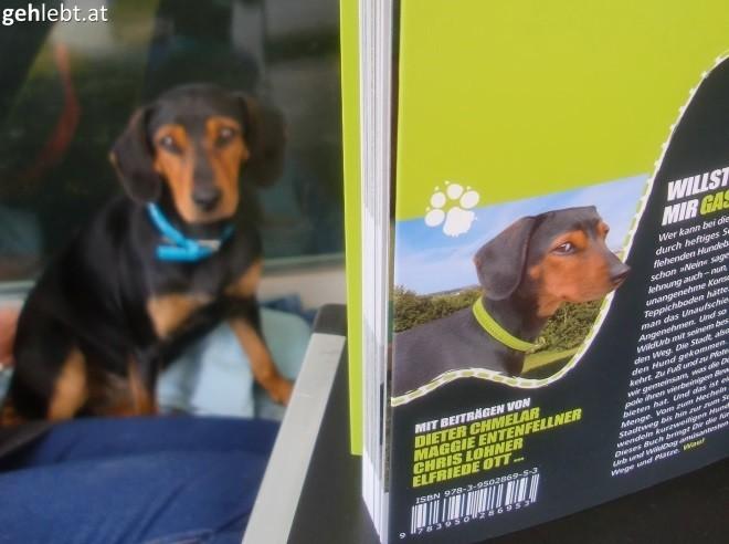 Die Hunde sehen sich ähnlich? Was für ein Zufall. Nicht.