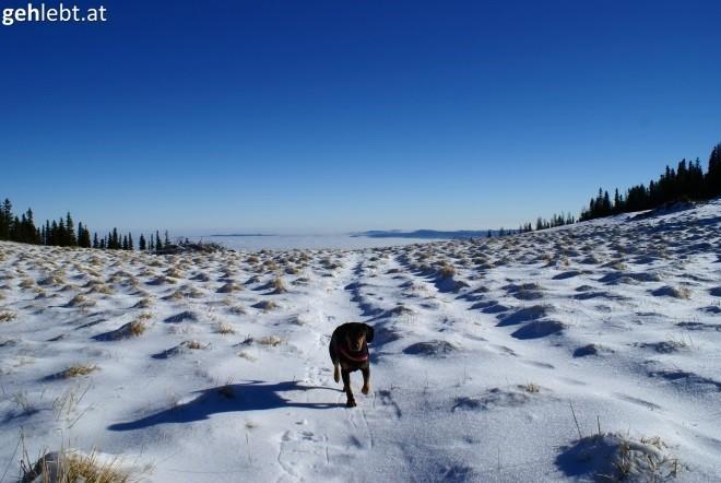 Winterliches Hundeglück.