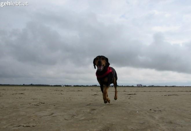 An der Nordsee wehen die Winde schon mal stärker.