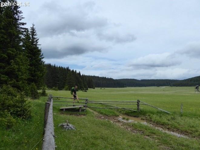 Bodenwiese mit Übergang.