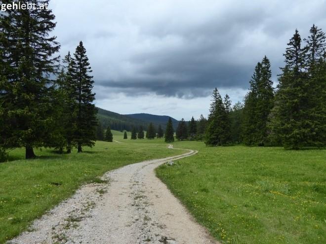 Bodenwiese mit dunklen Wolken.