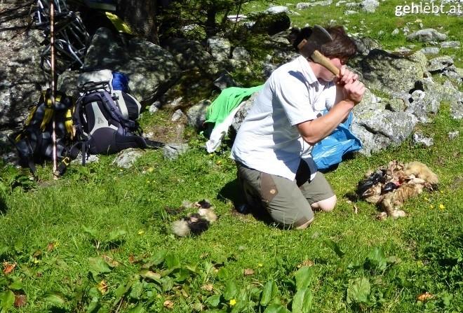 nationalpark-hohe-tauern-bartgeierfreilassung-im-untersulzbachtal-13
