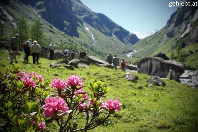 nationalpark-hohe-tauern-bartgeierfreilassung-im-untersulzbachtal-6