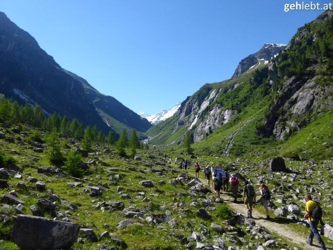nationalpark-hohe-tauern-bartgeierfreilassung-im-untersulzbachtal-8