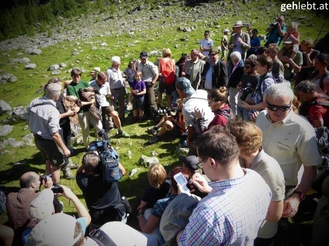 nationalpark-hohe-tauern-bartgeierfreilassung-im-untersulzbachtal-9