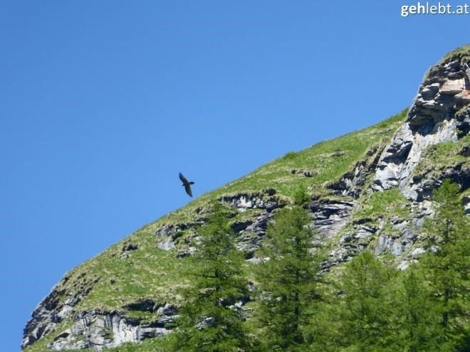 nationalpark-hohe-tauern-wandern-im-tal-der-geier-krumtal-6