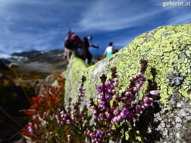 wanderung-zum-seebachsee-im-obersulzbachtal-nationalpark-hohe-tauern-10