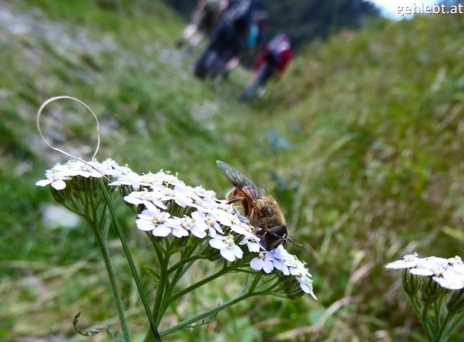 wanderung-zum-seebachsee-im-obersulzbachtal-nationalpark-hohe-tauern-2