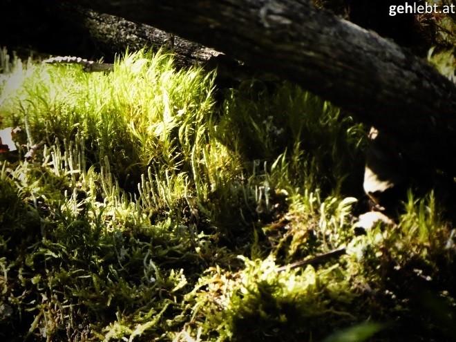 wanderung-zum-seebachsee-im-obersulzbachtal-nationalpark-hohe-tauern-20