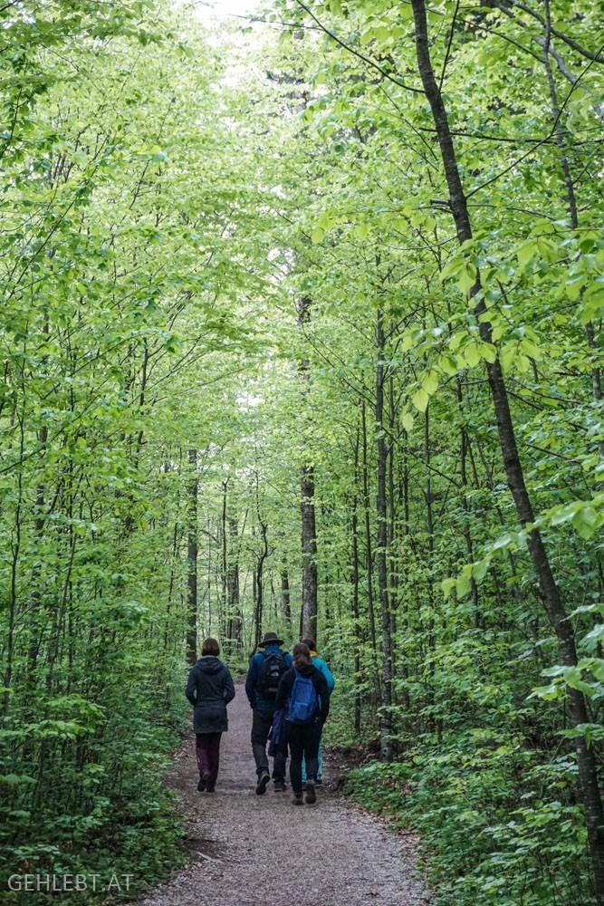 Wandern im Wald an der Alm.